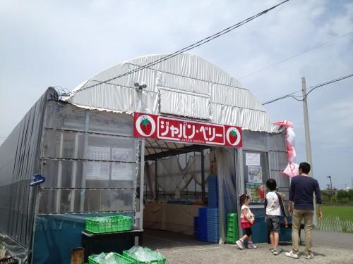 イチゴ狩りが300円!?食べ放題、時間制限もなしのジャパン・ベリー